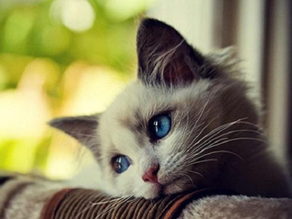 Mơ thấy mèo con là điềm lành hay dữ, đánh số mấy?